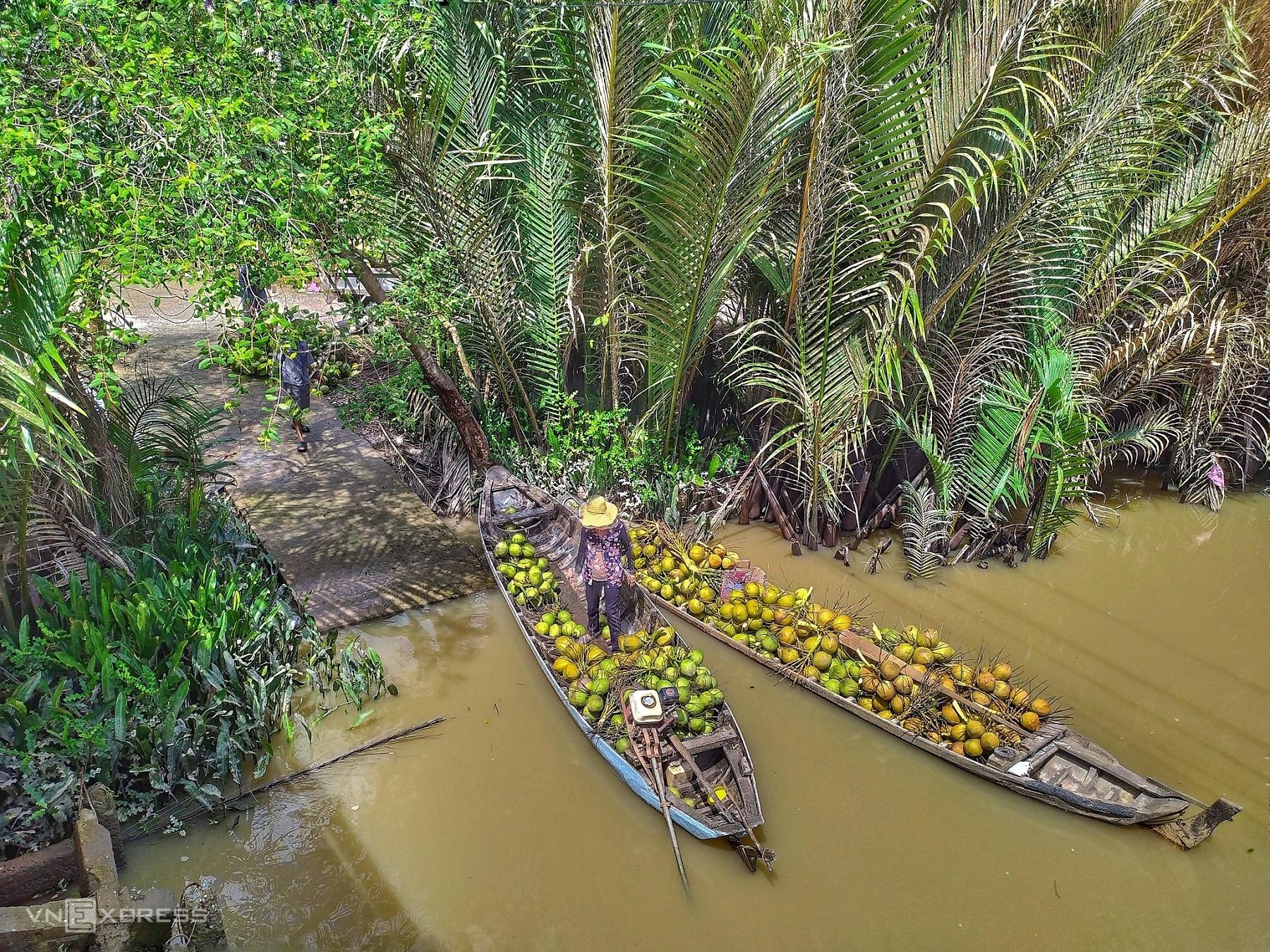 Thương lái lái ghe đến tận hộ gia đình hái và thu mua các buồng dừa tươi tại ấp Đông Ngô, xã Bình Hòa, Giồng Trôm.   Bến Tre được xem là thủ phủ dừa xanh với hơn 72.000 ha vườn dừa, trong đó huyện Giồng Trôm hơn 17.000 ha. Sản lượng dừa Bến Tre nhiều nhất cả nước, đạt gần 800 triệu trái/năm. Tận dụng ưu thế này nên Bến Tre đang xây dựng sản phẩm, hình ảnh gắn với cây dừa, là giá trị nổi bật để khai thác du lịch sinh thái sông nước xứ dừa.