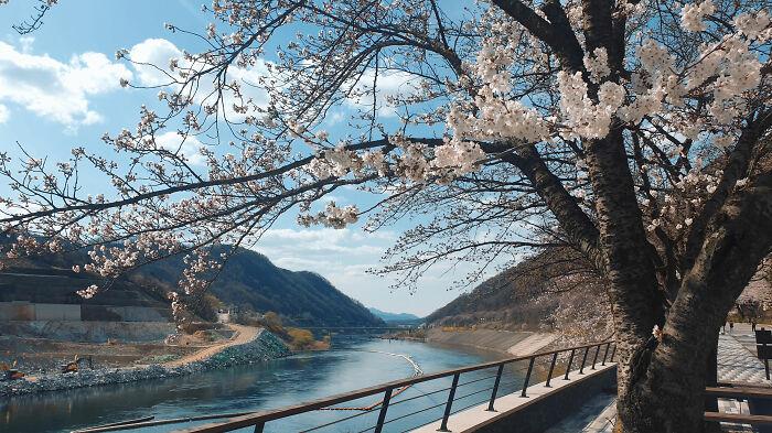 Và một điều dường như rất bình thường với người dân Hàn Quốc, nhưng lại làm say lòng nhiều du khách quốc tế nữa. Đó chính là thiên nhiên, cảnh sắc ở nơi đây quá đẹp. Không ít người khi nhìn bức ảnh trên đã để lại bình luận rằng, họ nhất định phải đến đây tham quan một lần trong đời. Ảnh: Reddit