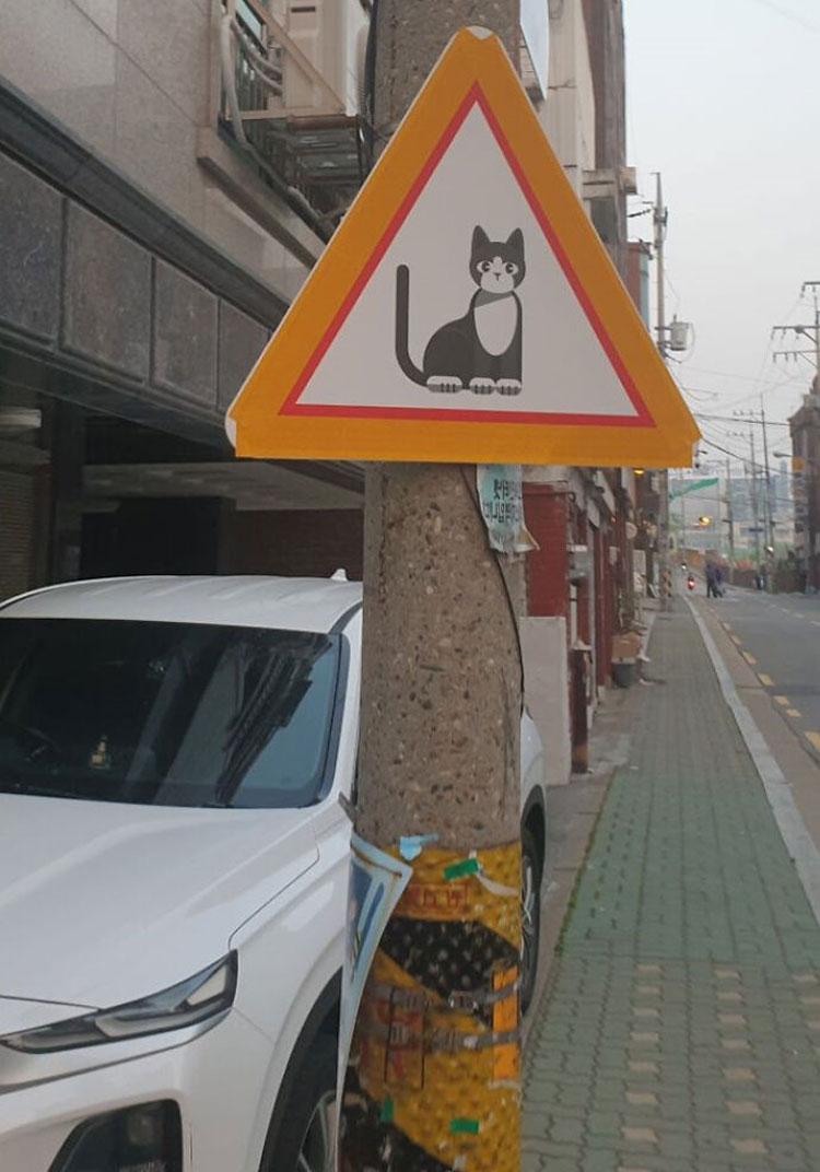 Tấm bảng hiệu có hình con mèo này không có nghĩa là biển báo đường dành cho mèo. Trên thực tế, nó mang ý nghĩa là cẩn thận, có mèo đi lại quanh đây, theo Hammer. Ảnh: Reddit