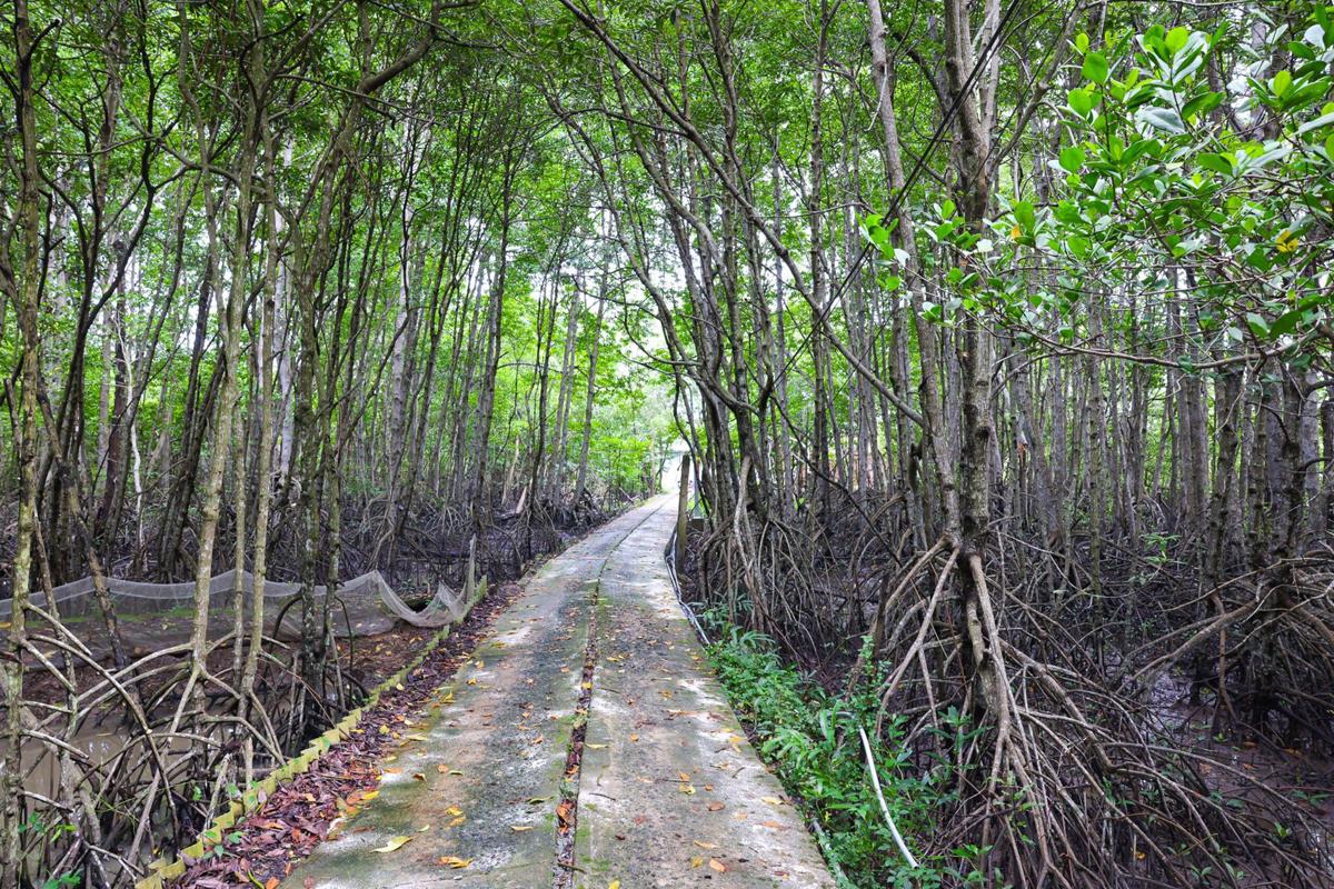 Đường dẫn vào Di tích Khu Căn cứ Cách mạng Rừng Sác có không gian xanh mát. Ảnh: Dương Lan