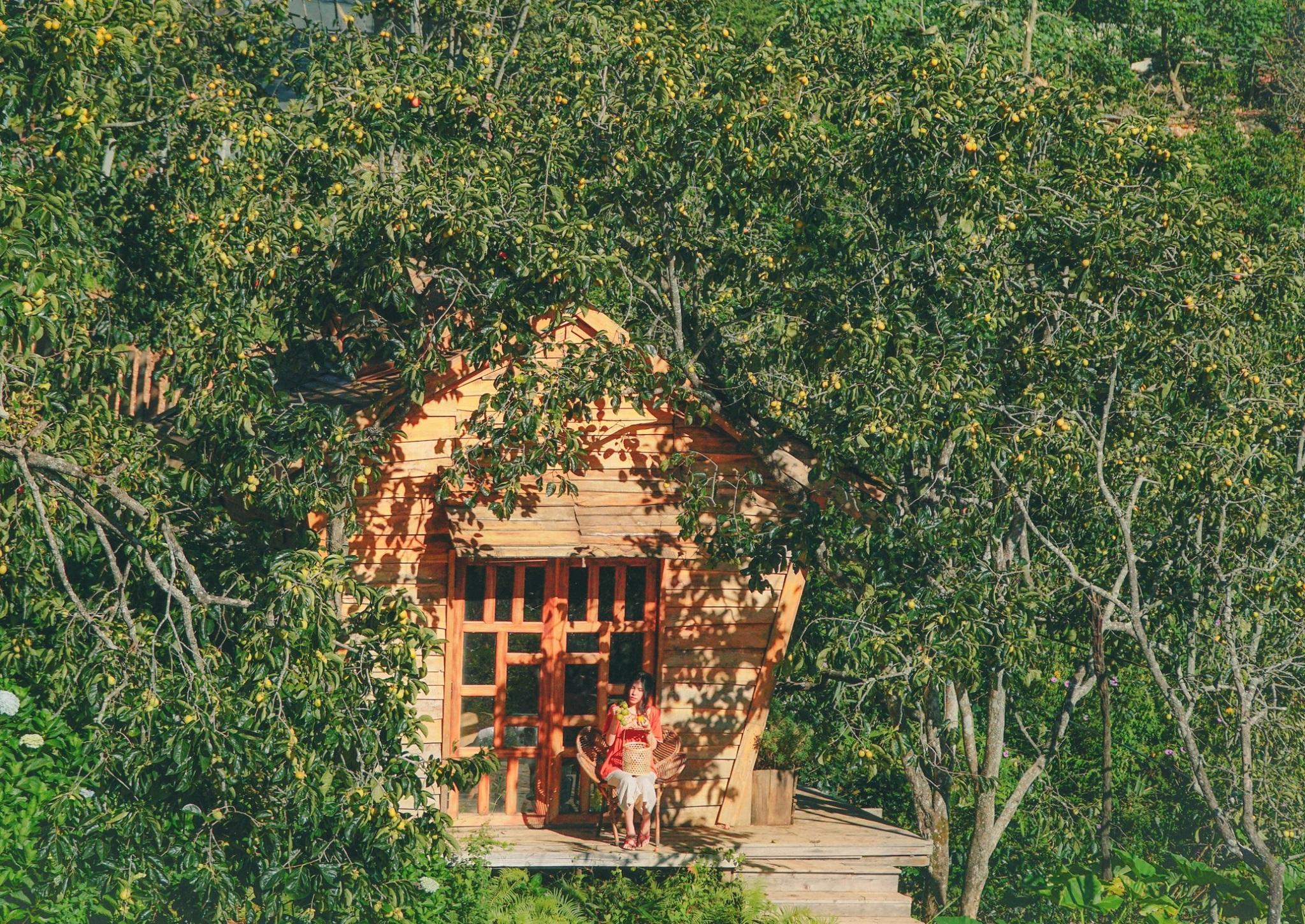 Phố núi Đà Lạt với tiết trời se lạnh, không chỉ là điểm du lịch nổi tiếng có cảnh sắc tươi đẹp quanh năm mà còn ưu ái ban tặng cho nơi này những vườn hồng đỏ cành lúc thu về. Trong ảnh là vườn hồng trong nắng thu của vợ chồng anh chị Trần Việt Anh và Hoàng Việt Anh (cùng 34 tuổi).  Du khách đi từ đường Hùng Vương, TP Đà Lạt hướng đi qua chùa Ve Chai, sau đó đi thẳng đường Tự Phước thêm 5 km là đến vườn hồng, tọa lạc tại xã Xuân Thọ, cách trung tâm phố núi khoảng 12 km.  Hơn 10 năm nay, năm nào vợ chồng anh chị Việt Anh cũng dành vài lần trốn TP. HCM lên xứ sở sương mù để du lịch, nghỉ dưỡng và đầu tư kinh doanh trang trại. Tháng 5/2020, khi Covid-19 bùng phát, cả gia đình 10 người của anh chị Việt Anh, gồm cha mẹ và anh chị hai bên quyết định lên định cư luôn ở Đà Lạt.  Hiện gia đình kinh doanh, kết hợp làm du lịch tại trang trại – quán cà phê – vườn hồng Mama Dala, trong đó vườn hồng diện tích 2.000 m2, với hơn 50 gốc, chủ yếu là giống hồng trứng đang vào giai đoạn thu hoạch quả.