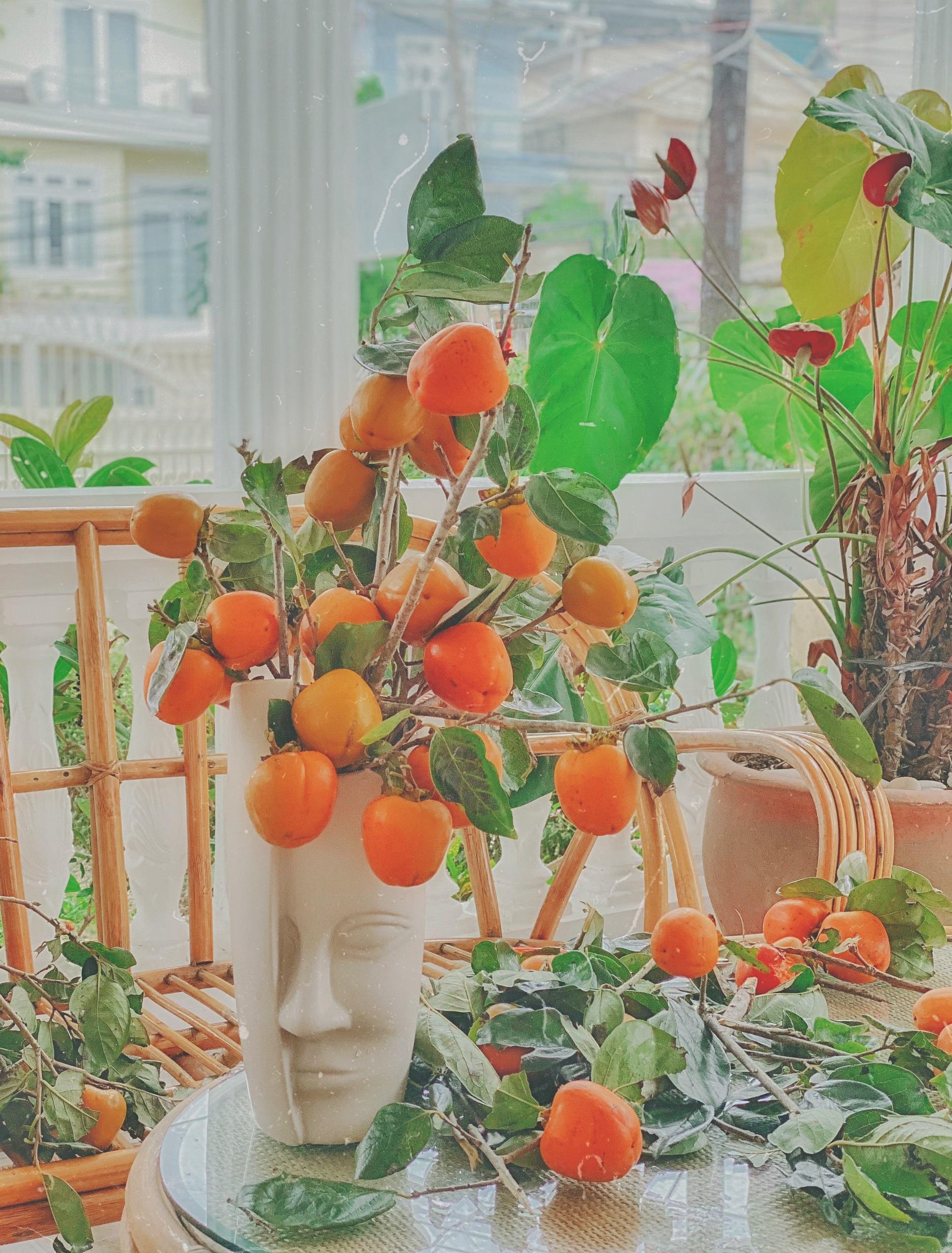 Những cành hồng quả chín đẹp còn được đem về cắm bình tạo không gian phòng khách thêm ấn tượng và đầy sắc màu vào dịp trung thu. Cắm cành được 10 ngày là trái rụng hơi héo, lúc đó lấy ủ lu gạo cho chín mềm, chị nói.