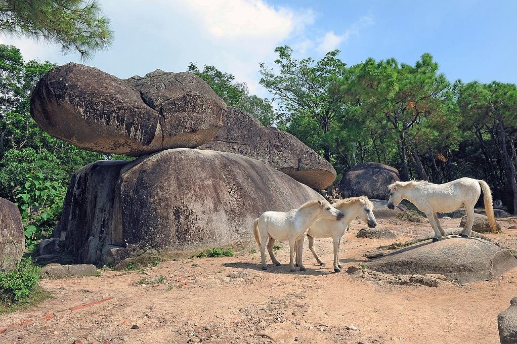 Hòn Trống mái tại Sầm Sơn.