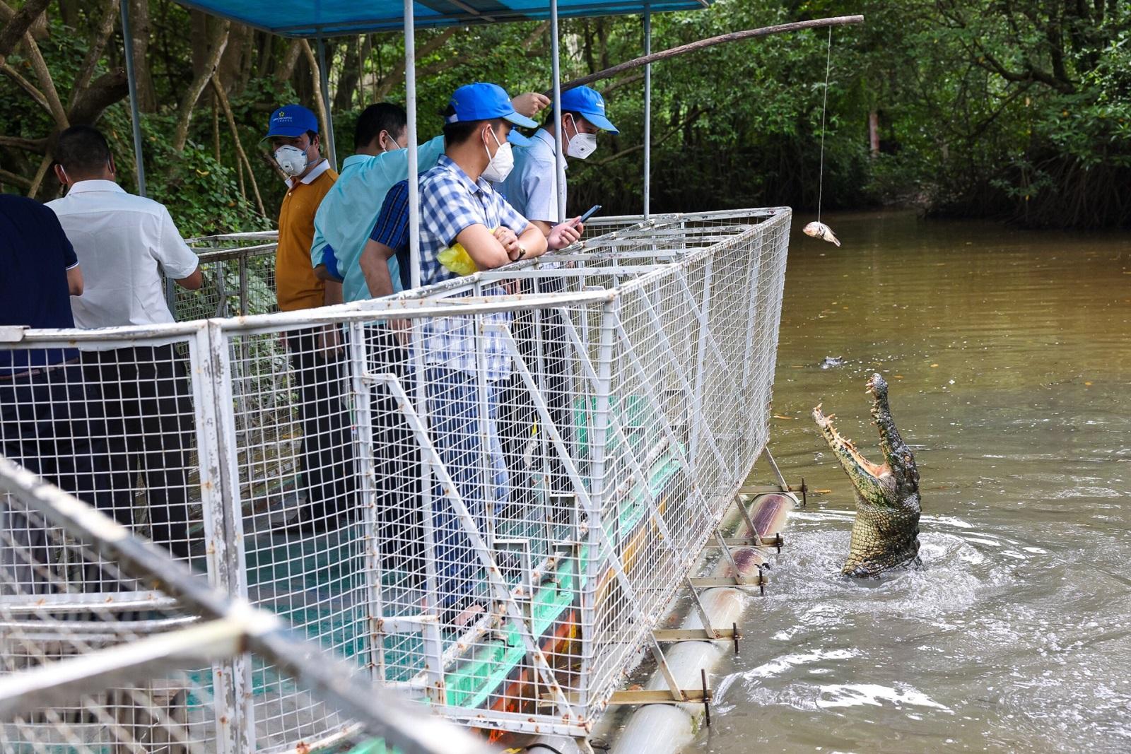 Đoàn khách du lịch câu cá sấu tại khu du lịch sinh thái Vàm Sát vào ngày 19/9. Ảnh: TCDL