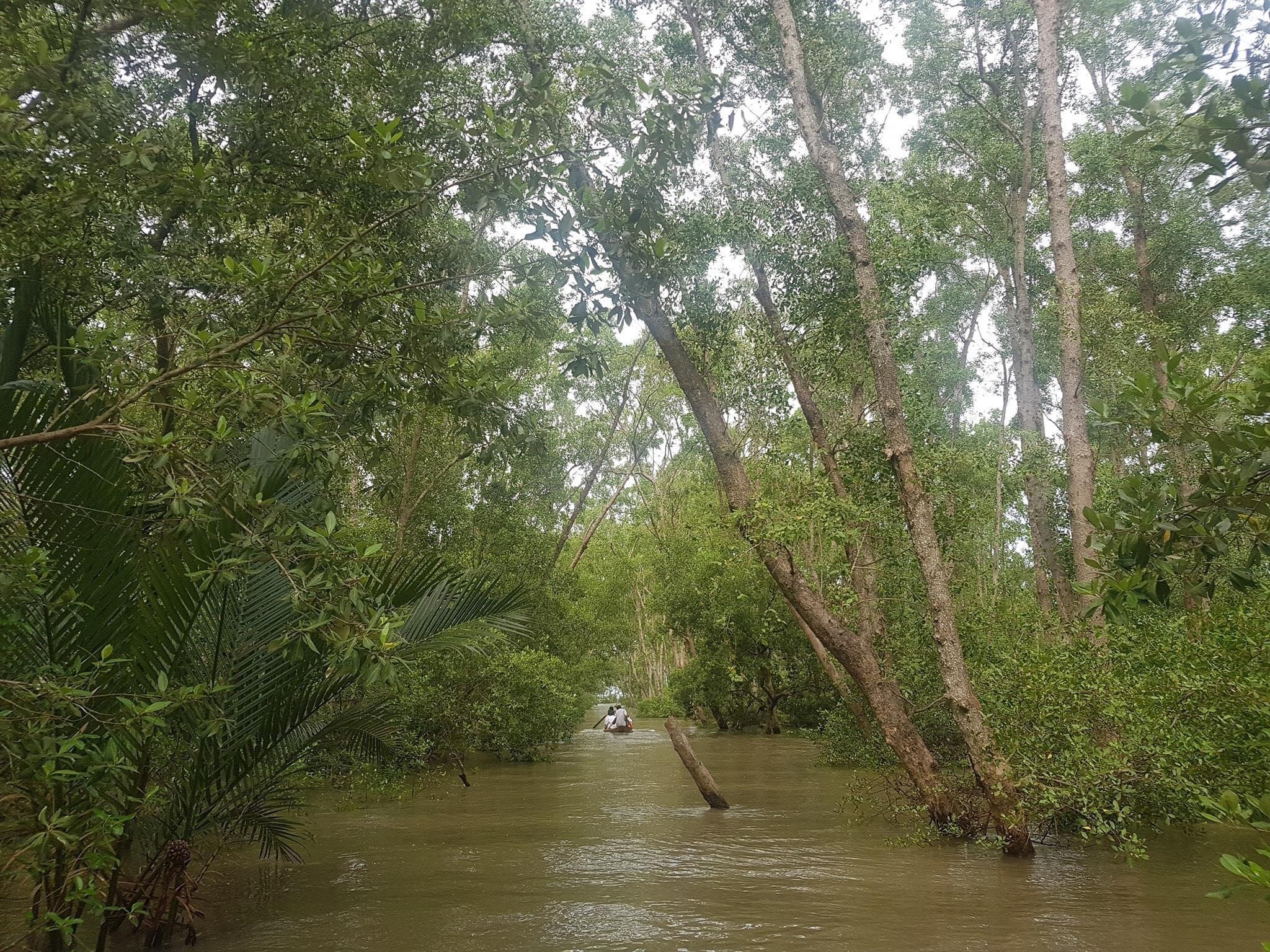 Đi thuyền xuyên rừng tràm cổ thụ của Cù Lao Dung tiến ra cửa biển.