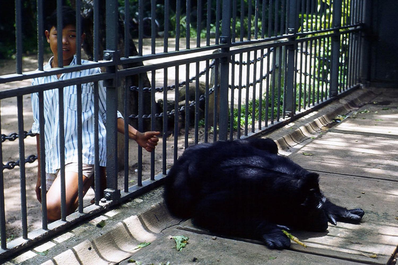 Chuồng thú ngày trước được rào bằng song sắt, nay được đổi thành tấm chắn kính cường lực để tối ưu hóa tầm nhìn và giữ an toàn cho du khách. Ảnh: Manh Hai/Flickr