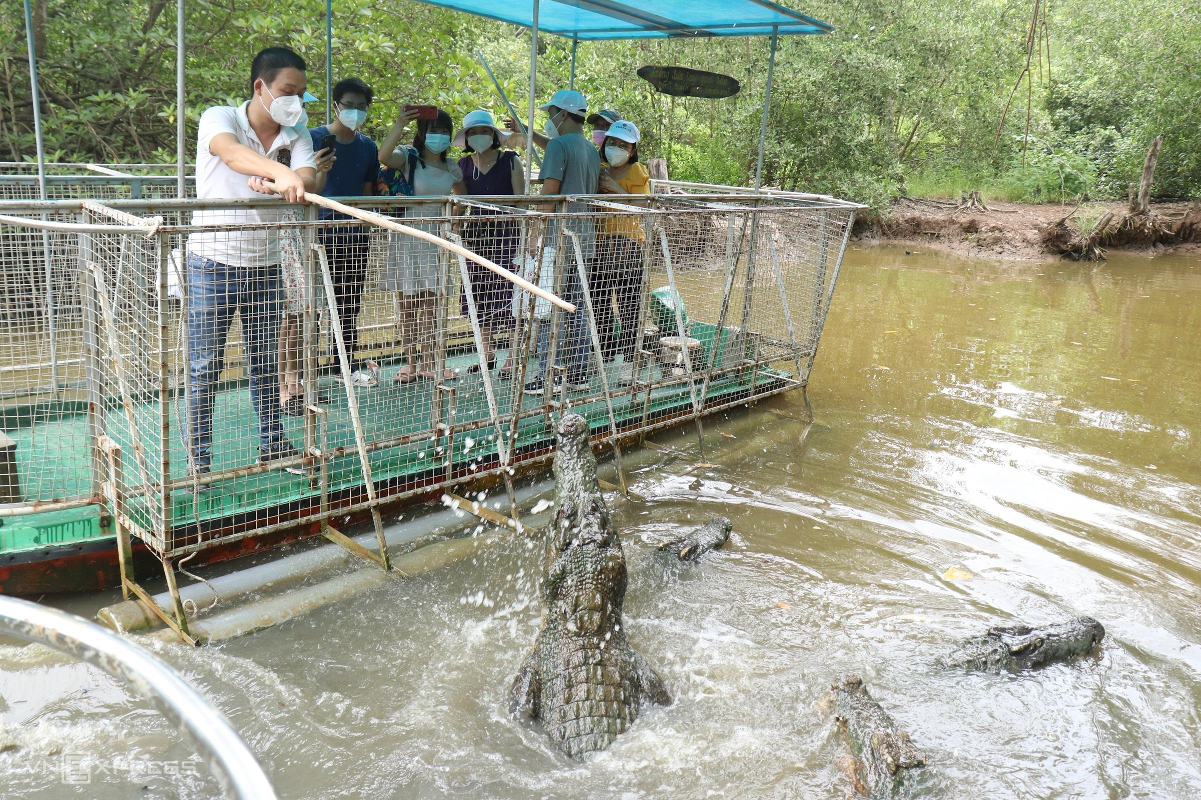 Khu bảo tồn cá sấu hoa cà có khoảng 40 con, du khách đi thuyền ra giữa đầm và trải nghiệm câu cá sấu. Ảnh: Huỳnh Nhi