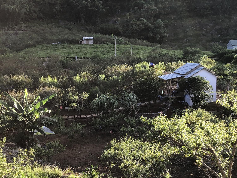 Ngôi nhà nhỏ của gia đình chị Phương giữa vườn cây.