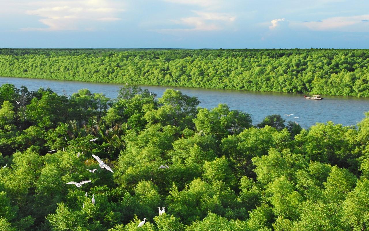 Cần Giờ với những cánh rừng đước bạt ngàn được mệnh danh là lá phổi xanh của thành phố.
