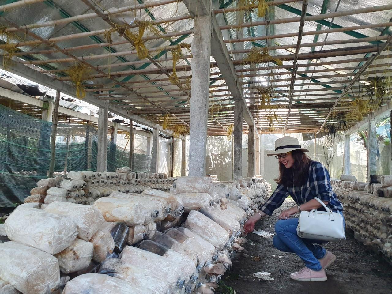 Du khách sẽ được hướng dẫn cách trồng và thu hoạch nấm. Ảnh: Vietravel